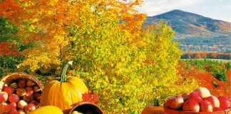 Sonbahar Diyeti ile 1 Haftada 2 Kilo Zayıflayın